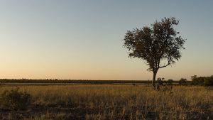 サバンナ草原 300x169 - 一度は行ってみていたい、世界で最も人気なキャンプ場